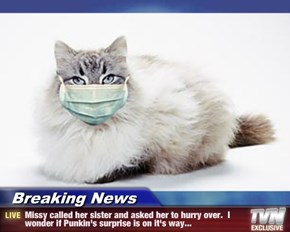 Breaking News - Missy called her sister and asked her to hurry over.  I wonder if Punkin's surprise is on it's way...