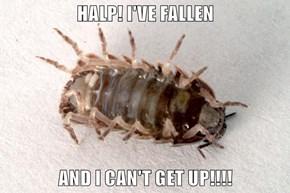 HALP! I'VE FALLEN  AND I CAN'T GET UP!!!!