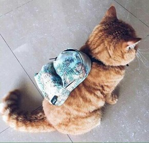 Kitty Has a Backpack for All of Its Purrsonal Belongings
