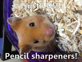 I just LOVE  Pencil sharpeners!