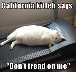 "California kitteh says  ""Don't tread on me"""