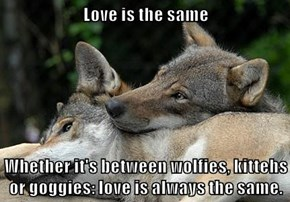 Love is the same  Whether it's between wolfies, kittehs or goggies: love is always the same.