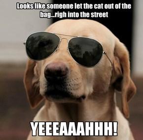 CSI Dog Has Spoken