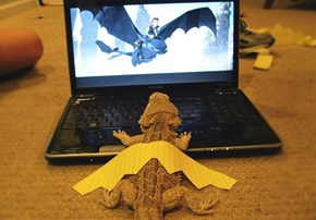 Dragons Come in All Shapes and Sizes