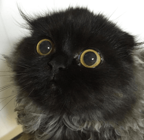 People Are Obsessed With This Cat's Giant Eyes