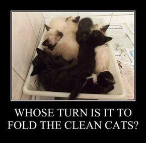 WHOSE TURN IS IT TO FOLD THE CLEAN CATS?