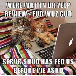 If Cats Could Use Yelp