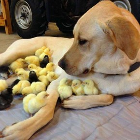 The Ultimate Chick Magnet