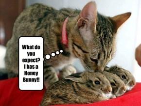 What do you expect? I has a Honey Bunny!!