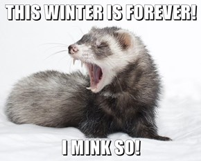 THIS WINTER IS FOREVER!   I MINK SO!