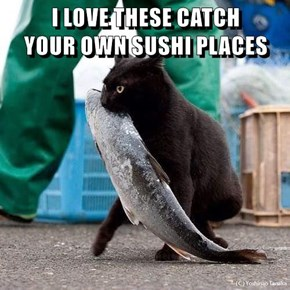 I LOVE THESE CATCH                     YOUR OWN SUSHI PLACES