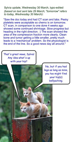 Sylvia update, Wednesday 30 March - with cattitude