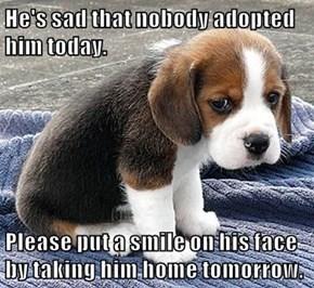 Adopt, Don't Shop.