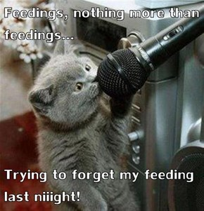 Every Time I Feed My Cat Generic Food He Starts Singing The Same Song.
