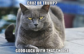 CRUZ OR TRUMP?  GOOD LUCK WITH THAT CHOICE