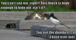You can't see me, right? This block is high enough to hide me, isn't it?  You are the dumbest cat                                                                        I have ever met.