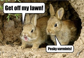 Irony Bunnies