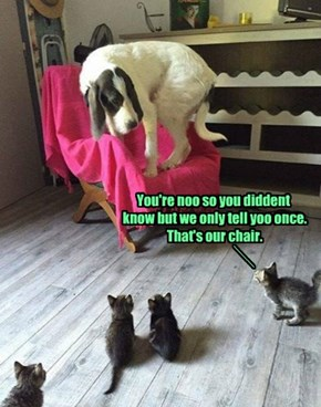 You're noo so you diddent  know but we only tell yoo once.  That's our chair.