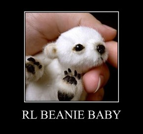 RL BEANIE BABY