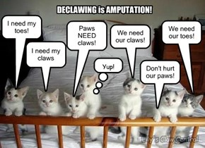 Declawing is bad