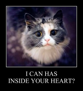 I CAN HAS INSIDE YOUR HEART?