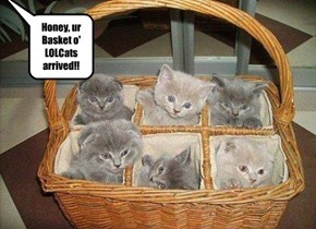 Honey, ur Basket o' LOLCats arrived!!