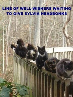 We Love You, Sylvia!