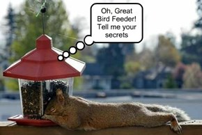 Oh, Great Bird Feeder! Tell me your secrets