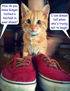 How do you know Ginger horked a hairball in your shoes?
