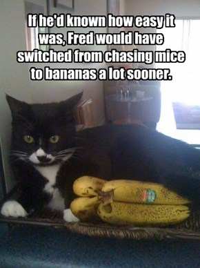 If he'd known how easy it was, Fred would have switched from chasing mice to bananas a lot sooner.