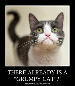"""THERE ALREADY IS A """"GRUMPY CAT""""?!"""