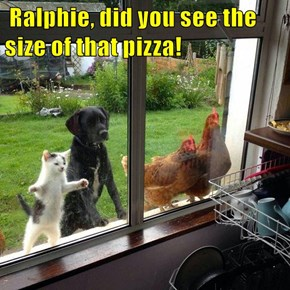 Ralphie, did you see the size of that pizza!