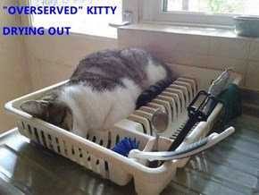 """""""OVERSERVED"""" KITTY                                                                 DRYING OUT"""