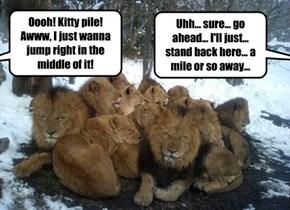 KITTY PILE!