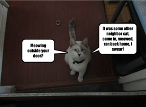 Meowing outside your door?