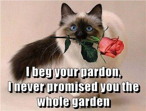 I beg your pardon,                       I never promised you the whole garden