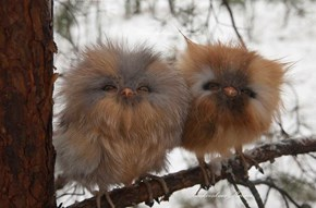 Wait, Furbys Are Real!?