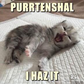 PURRTENSHAL   I HAZ IT