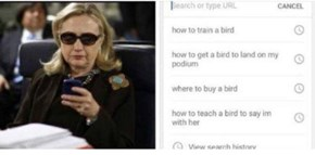 Hillary's Incriminating Web Search