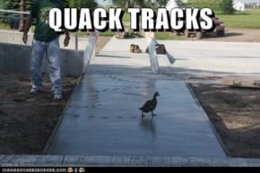 QUACK TRACKS