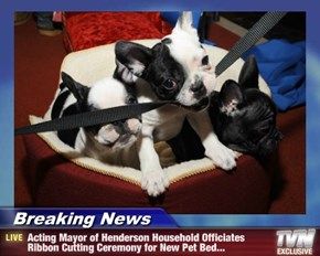 Breaking News - Acting Mayor of Henderson Household Officiates Ribbon Cutting Ceremony for New Pet Bed...