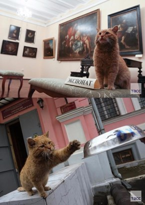 The Best Employee at Russia's Serpukhov Museum is a Cat Named Maray