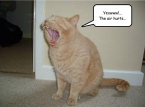 Fibromyalgia Cat
