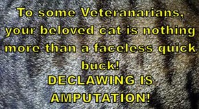 To some Veteranarians, your beloved cat is nothing more than a faceless quick buck!  DECLAWING I$ AMPUTATION!