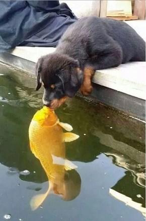Kissy the Fishy