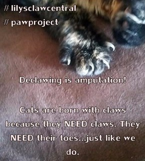 #lilysclawcentral                   #pawproject Declawing is amputation! Cats are born with claws because they NEED claws. They NEED their toes...just like we do.