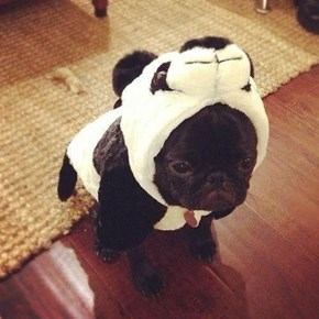 They Told Him That He Could Be Anything, so He Became a Panda