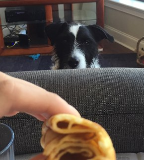 You Gonna Finish That?