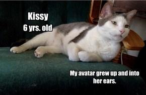 Kissy, Allcats' Kitteh