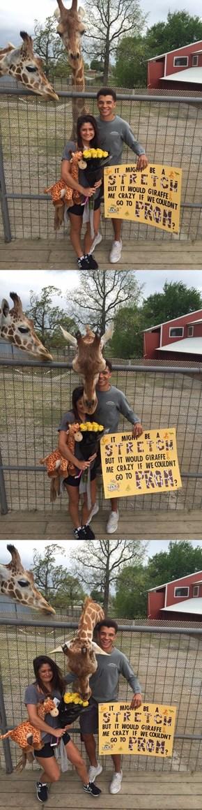 Jealous Giraffe Interrupts Teen's Prom-Posal
